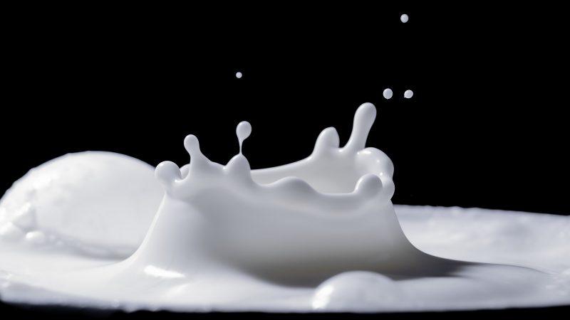 przewód mleczny